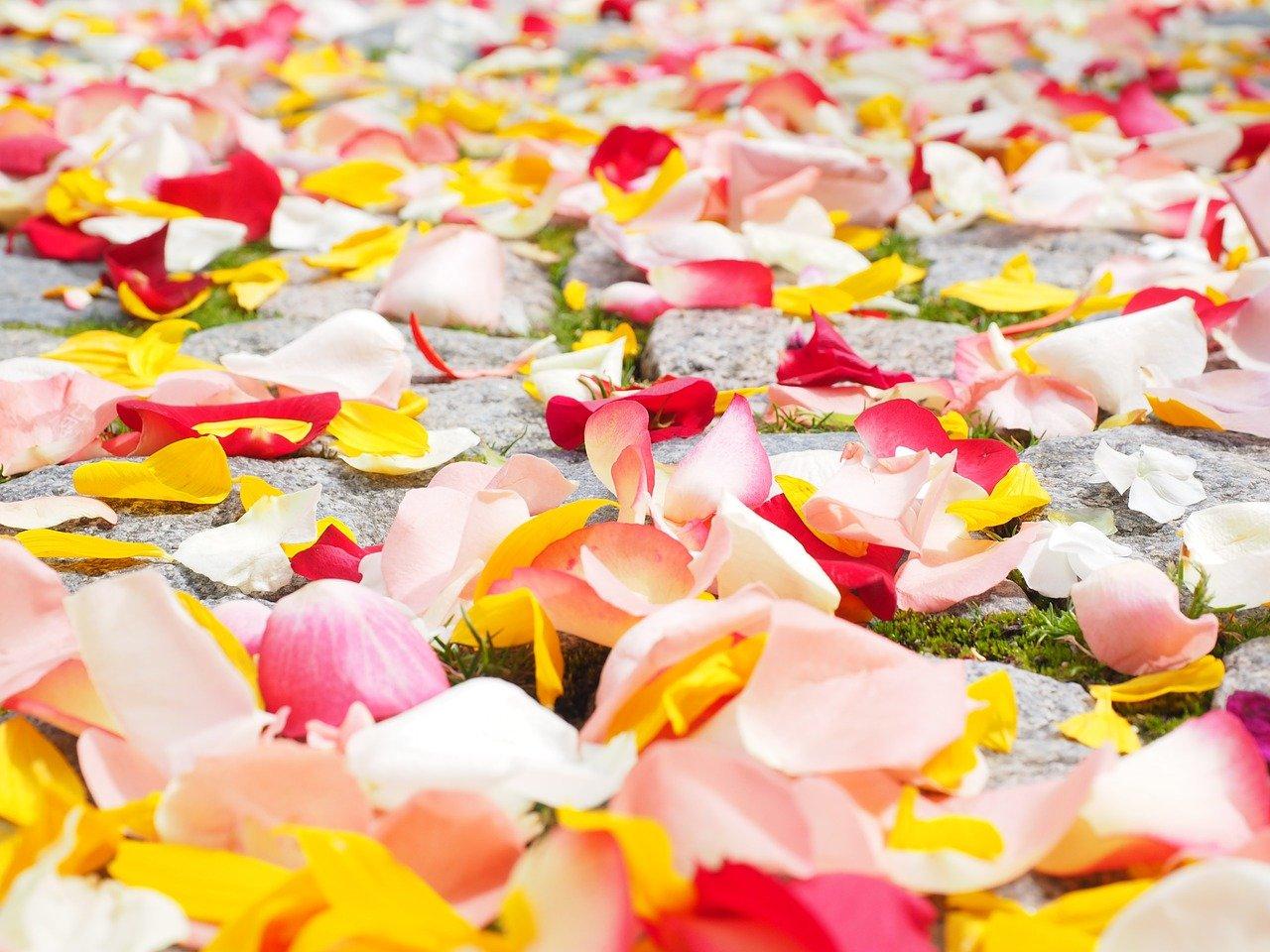rose-petals-petals-wedding-693570.jpg